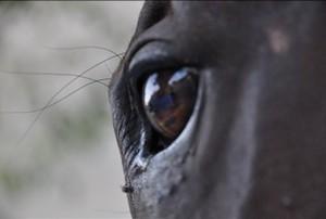 occhio-Bucefalo-Alessandro-Magno