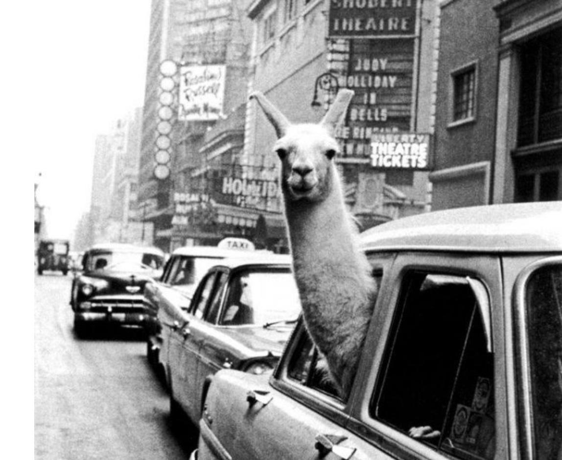 A Llama in Times Square | Inge Morath